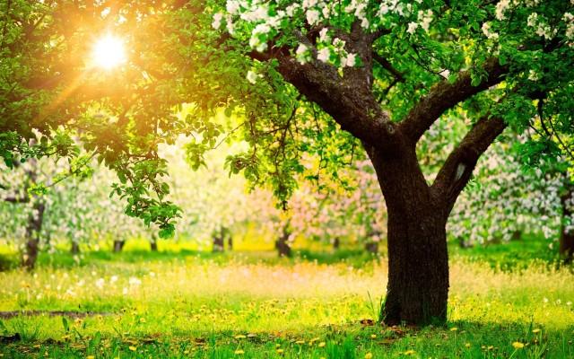 fruit-trees-spring