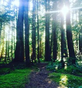 woods2016